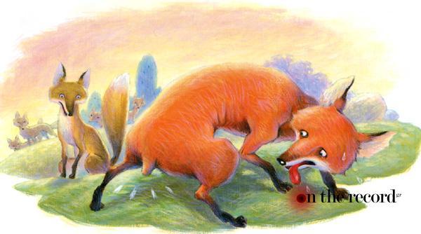 fox_pic_mesa